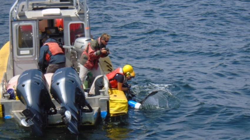 082318 leatherback turtle rescue