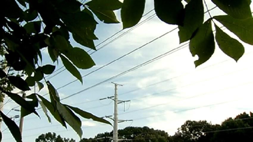 0825-trees