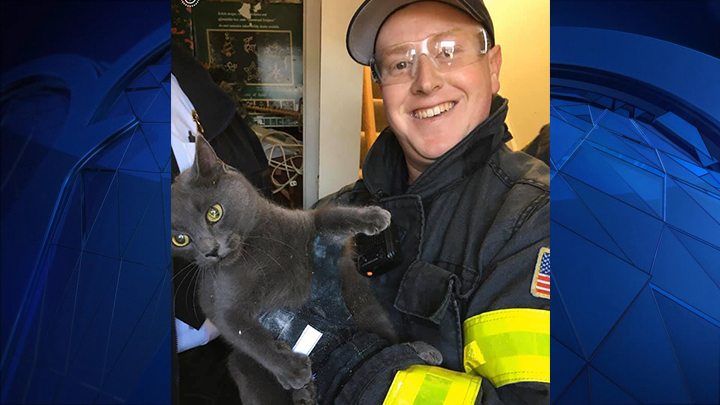 """Phoebe"" the cat was rescued by the Hyannis Fire Department on Thursday, Jan. 23, 2020 after becoming stuck in the void of a wall."