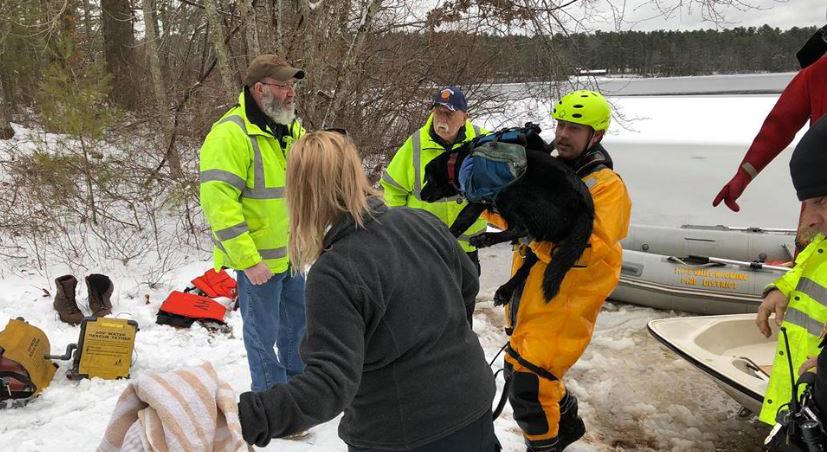 3419 dog rescue rhode island