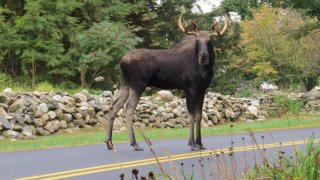 [UGCNECN-CJ-weather]Drivers Warned of Moose Crossing Roads https://t.co/2regDLttDr via @necn https://t.co/XnzhFuWkUB