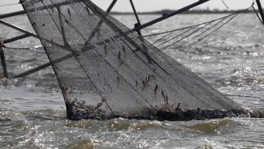 Gulf Oil SPill Shrimpers Under Pressure