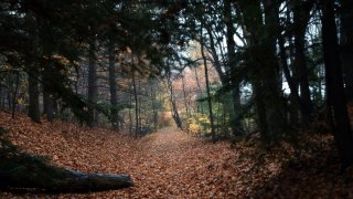 A trail is covered by leaves in the 750-acre Arcadia Wildlife Sanctuary in Easthampton, Massachusetts, Nov. 12, 2002.