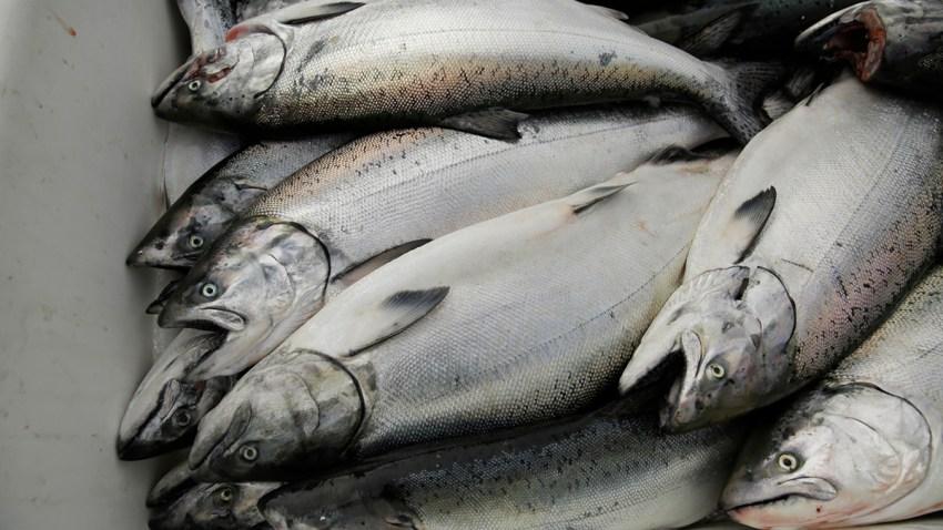 King Salmon Boom