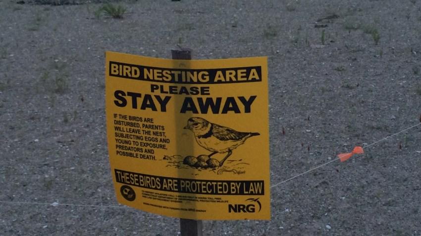 BEWARE-OF-THE-BIRDS