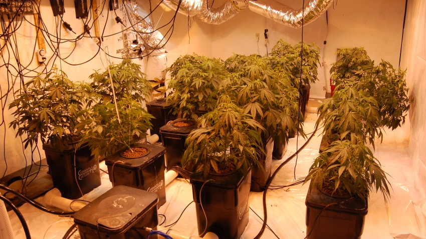 Barnstable grow operation