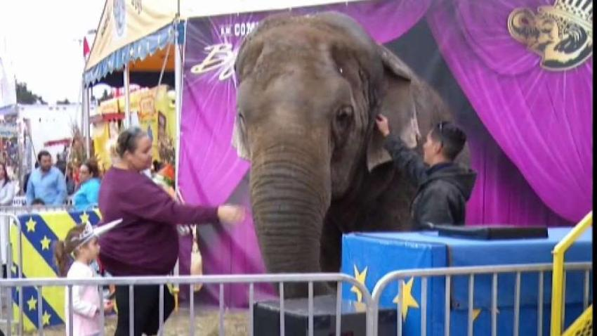 Beloved_Elephant_at_Big_E_Has_Died