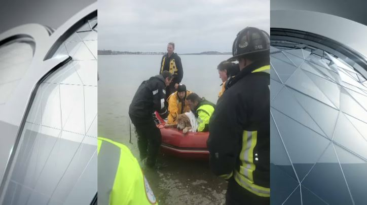Boston dog rescue