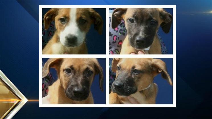 Buxton Puppies1
