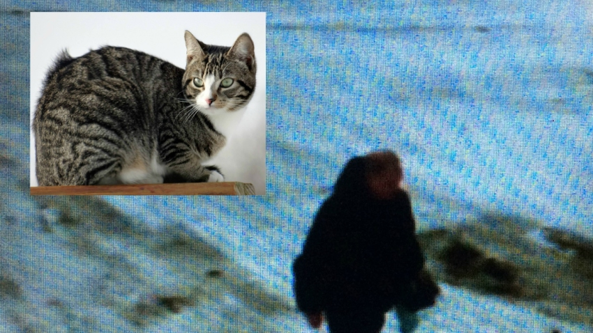 Cat Burglary 013116