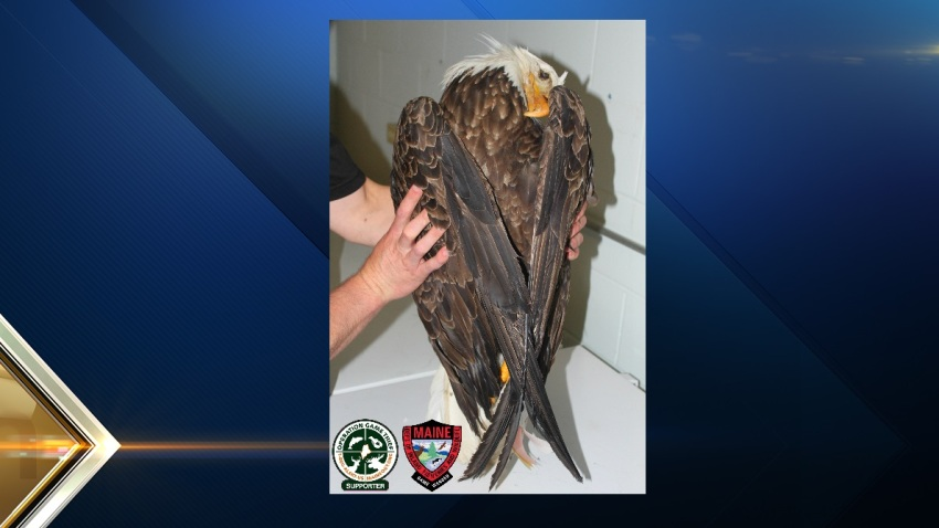 Dead eagle ME
