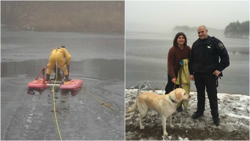 Dog Ice Rescues 010415