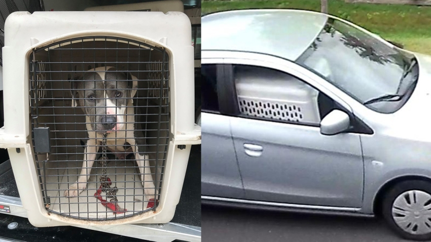 Dog abandoned in crate in Windsor