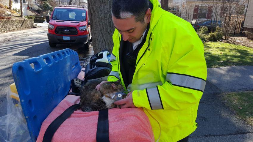 Fallon treating cats