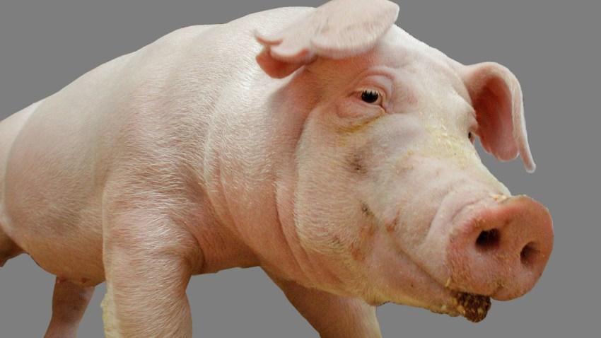 Generic Pig Generic