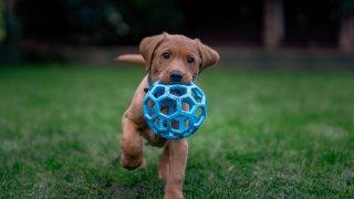 A file photo of a dog