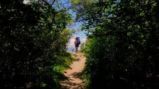Appalachian trail in Shenandoah National park, Virginia.