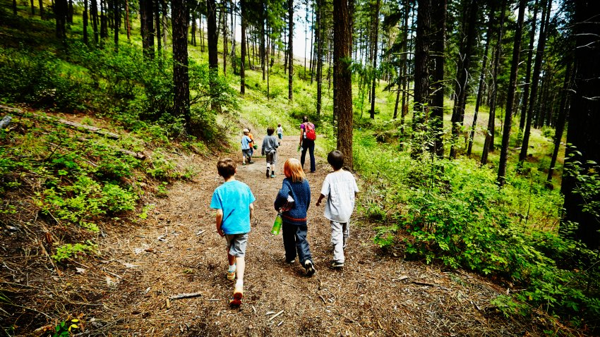 Group of young kids walking on trail in the woods with camp counselor at summer camp