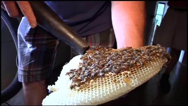 Governor Bradford House RI bees WJAR