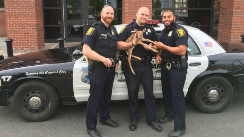 Hartford Police rescue a fawn main