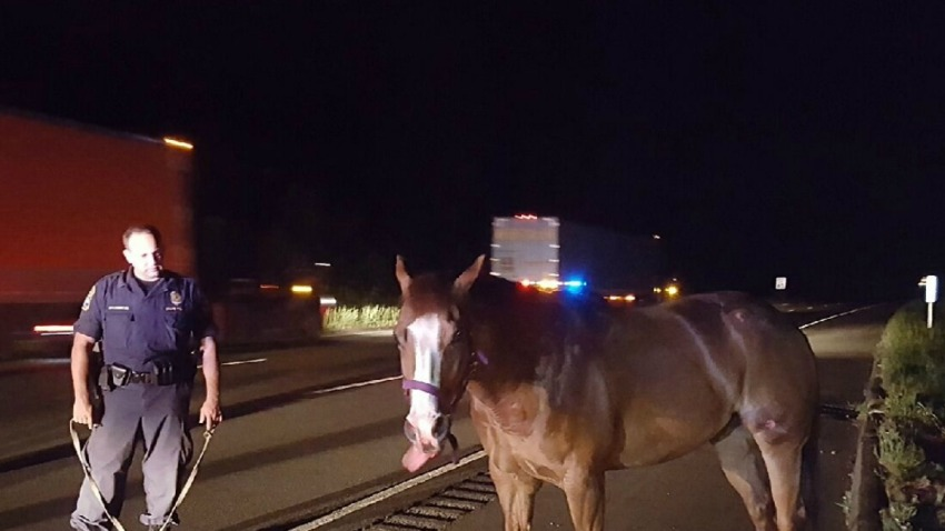 Horse on Interstate 91