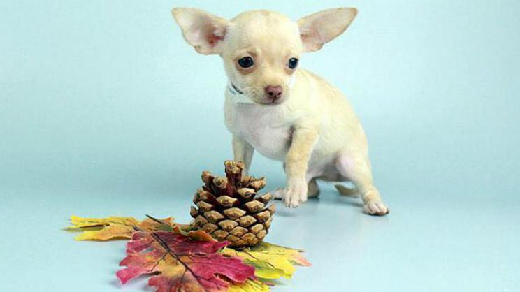 Little Shop of Pets Stolen Puppy