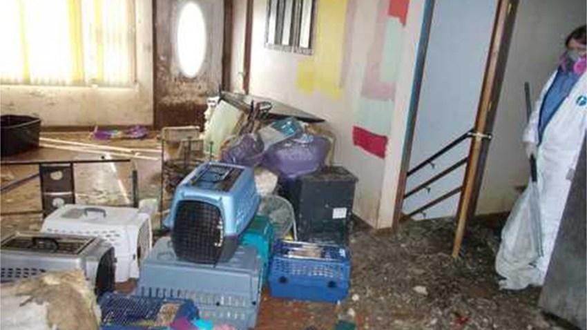 Ludlow cat hoarding 2