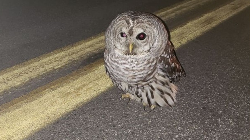 Maine state police trooper rescues owl 11152019