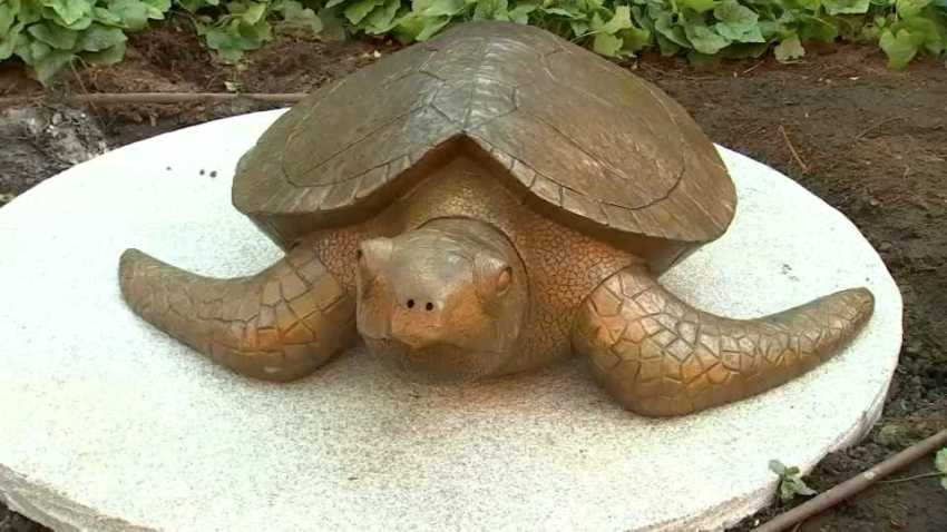 Myrtle the Turtle uncovered