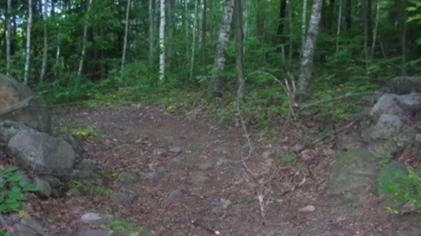 NH_Hiking_Trails_With_Barbed_Wire.jpg