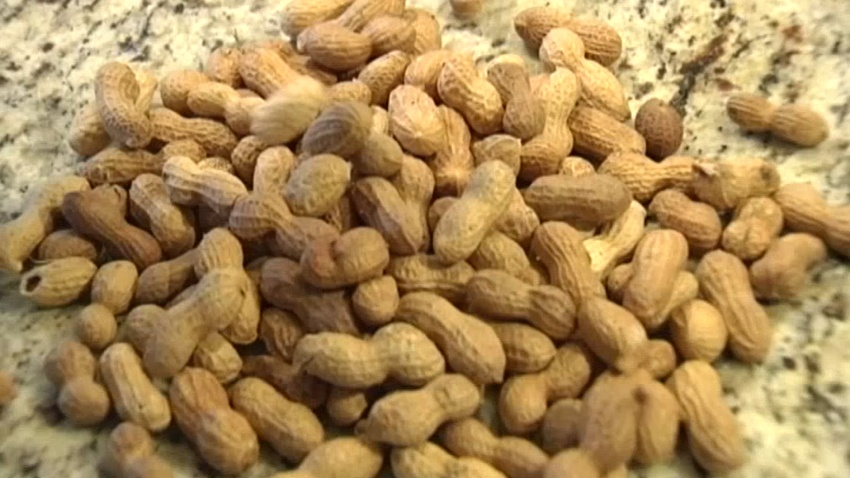 Pile of Peanuts in Shell