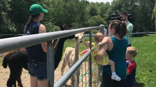Pineland Farms Maine Vacation Week 2017