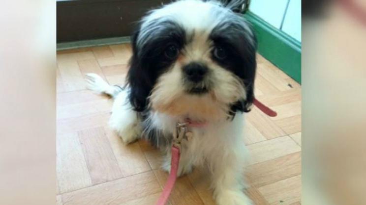 Stolen Providence Puppy