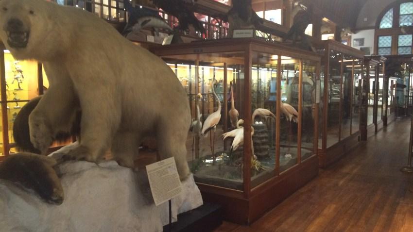 Vacation Week Fairbanks Museum 1