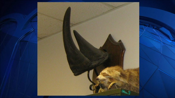 Vermont Stolen Rhino Horn