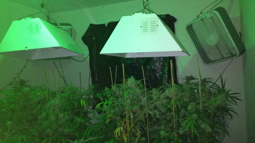 Vermont marijuana bust 2