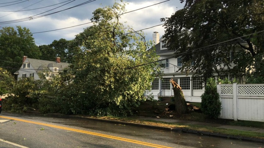Winchester Tree down1