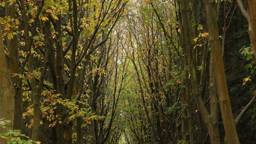 Woods-Generic Trees