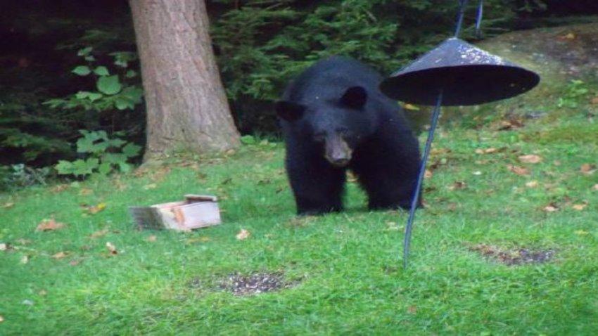 bear birdfeeder 3