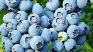 blueberry_cluster 722