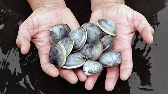 clams11