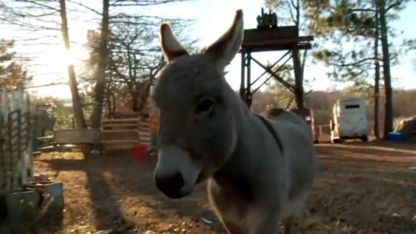 donkey NEW