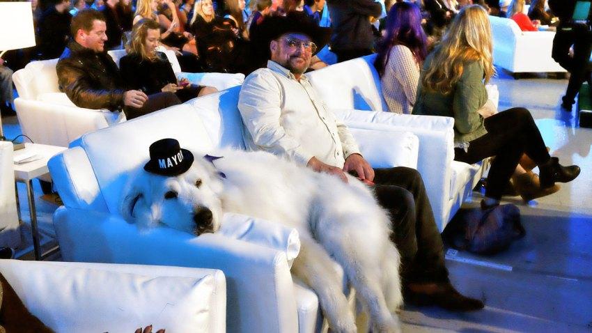 Pets World Dog Awards