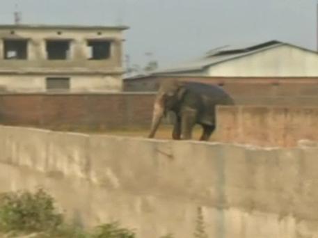 elephant ramage