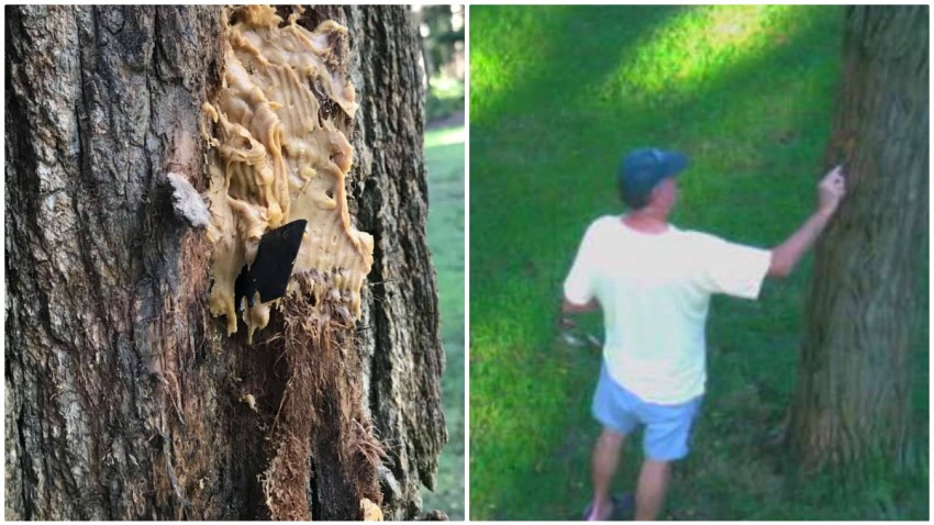 fal tree