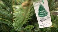 Fir Real, Christmas Tree Prices Are Up With Supplies Tight
