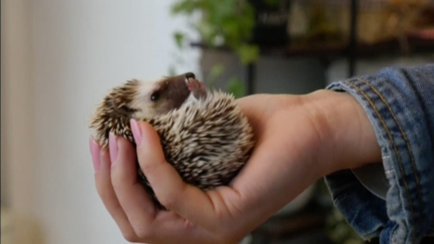 hedgehog-cafe-lede.jpg