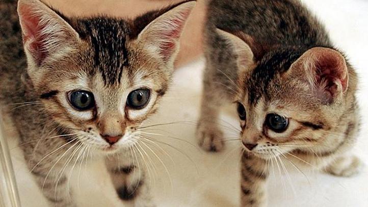 kittens generic