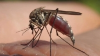 First Confirmed Case of Jamestown Canyon Virus Detected in NH This Year