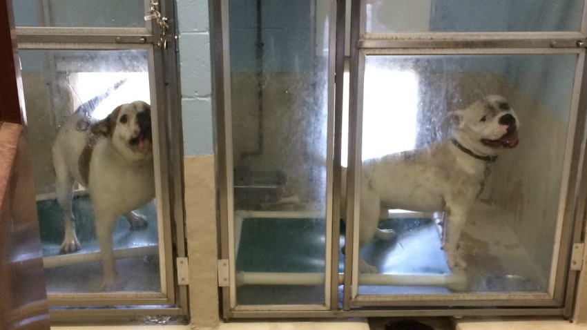 new haven dogs to be euthanized